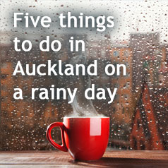 5-things-to-do-in-auckland-on-a-rainy-day-b