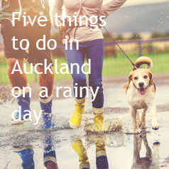 5-things-to-do-in-auckland-on-a-rainy-day