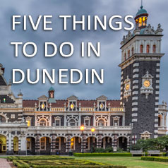 things-to-do-in-dunedin